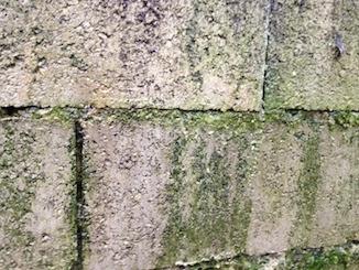 Traiter mur ou toiture contre le lichen les algues la - Enlever la mousse sur un mur exterieur ...