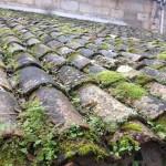 bricolage-traiter-mur-toiture-mousse-algue-lichen-3b